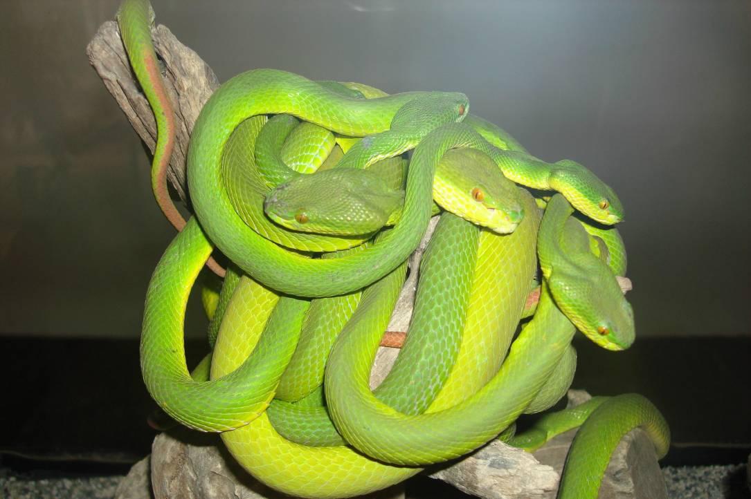 оно можно ли змеям зеленый свет термобелье